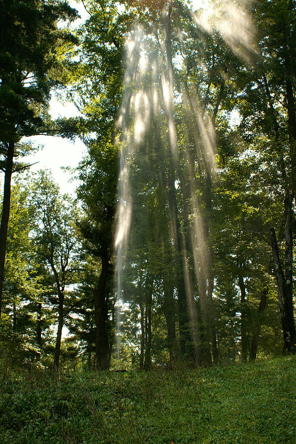 Trees Photograph - Almighty by Margaret Steinmeyer