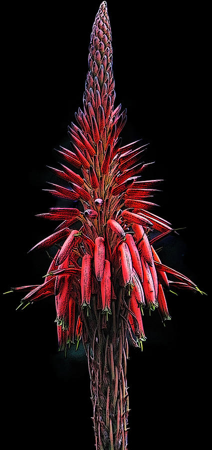 Flor Photograph - Aloe Flowers by Jesus Nicolas Castanon