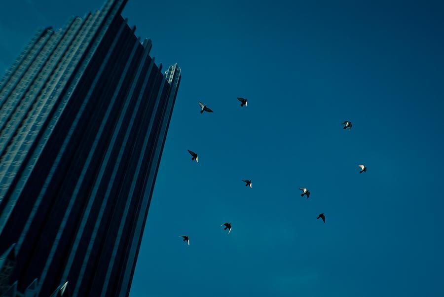 Birds Photograph - Aloft by Jason Heckman