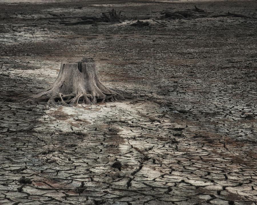 Tree Photograph - Alone by Brenda Bryant