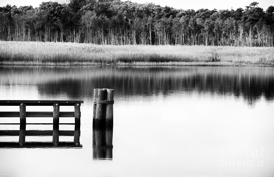 Alone Photograph - Alone In The Pine Barrens by John Rizzuto