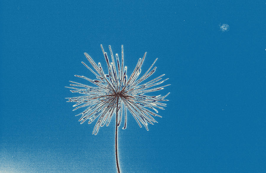 Dandelion Seed Photograph - Alone by Jesus Nicolas Castanon