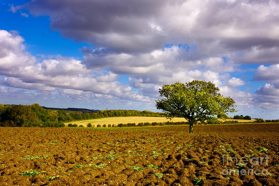 Landscape Photograph - Alone On The Field  by Radoslav Toth