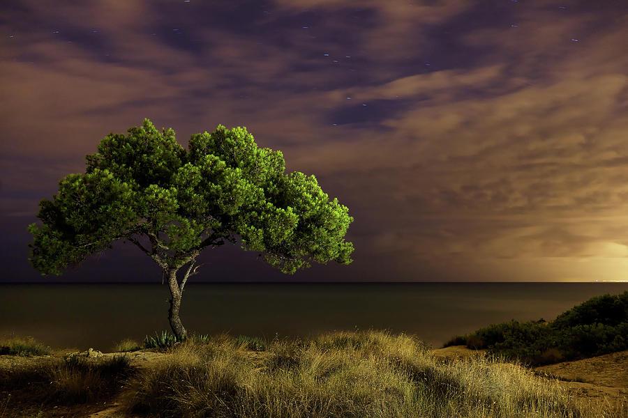 Horizontal Photograph - Alone Tree by Alex Stoen Photography