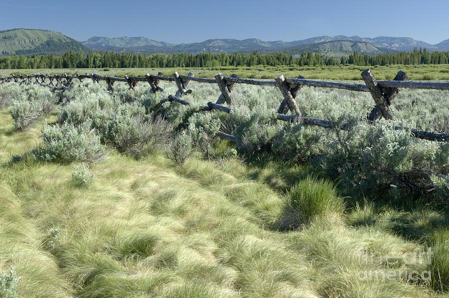 Grand Teton National Park Photograph - Along The Fence by Sandra Bronstein