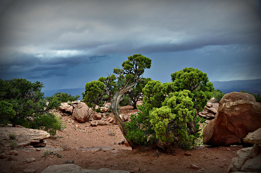 Canyonlands National Park Photograph - Along The Rim by Marty Koch