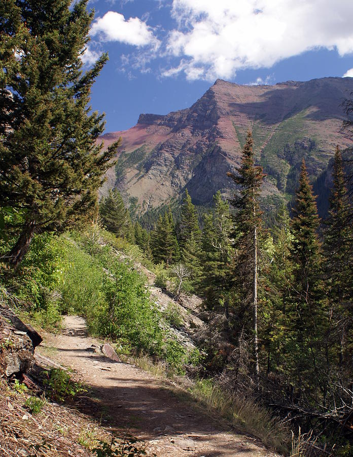 Glacier National Park Photograph - Along The Trail by Marty Koch