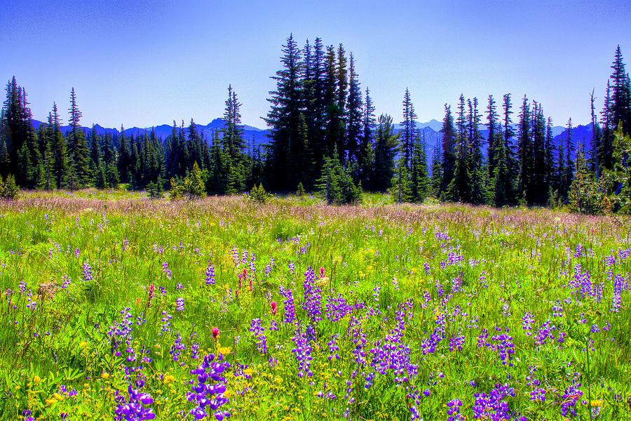 Mount Rainier Photograph - Alpine Meadow V At Mount Rainier by David Patterson