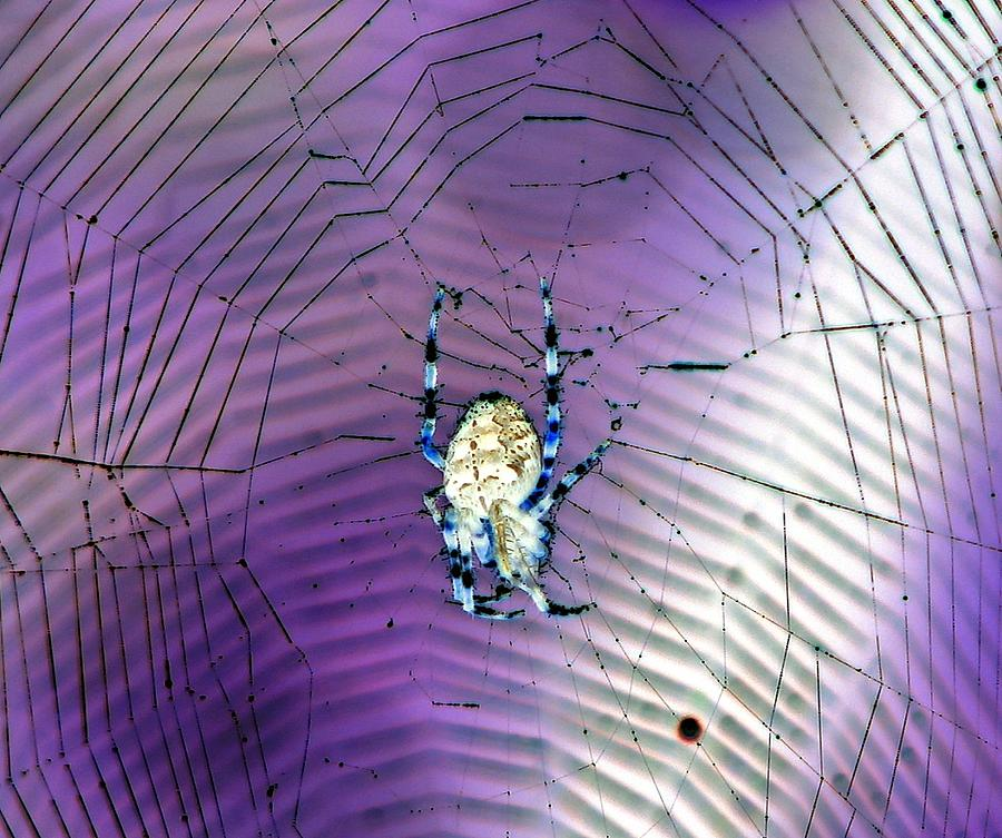 Spider Photograph - Altered States by Chris Anderson