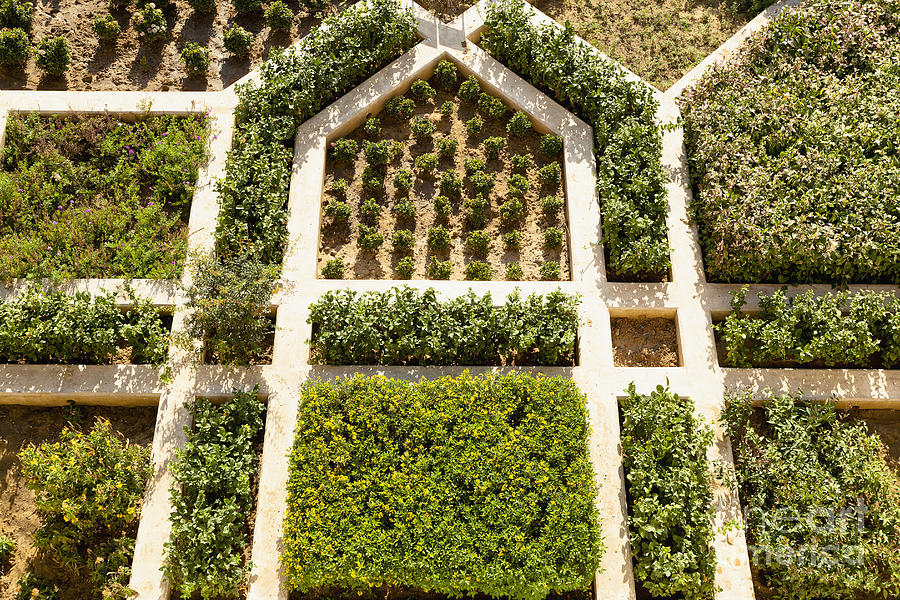 Aerial Photograph - Amber Fort Garden by Inti St. Clair