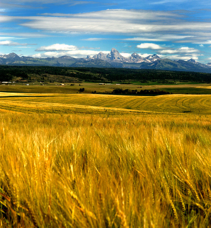 Landscape Photograph - Amber Waves by Rusty Enderle