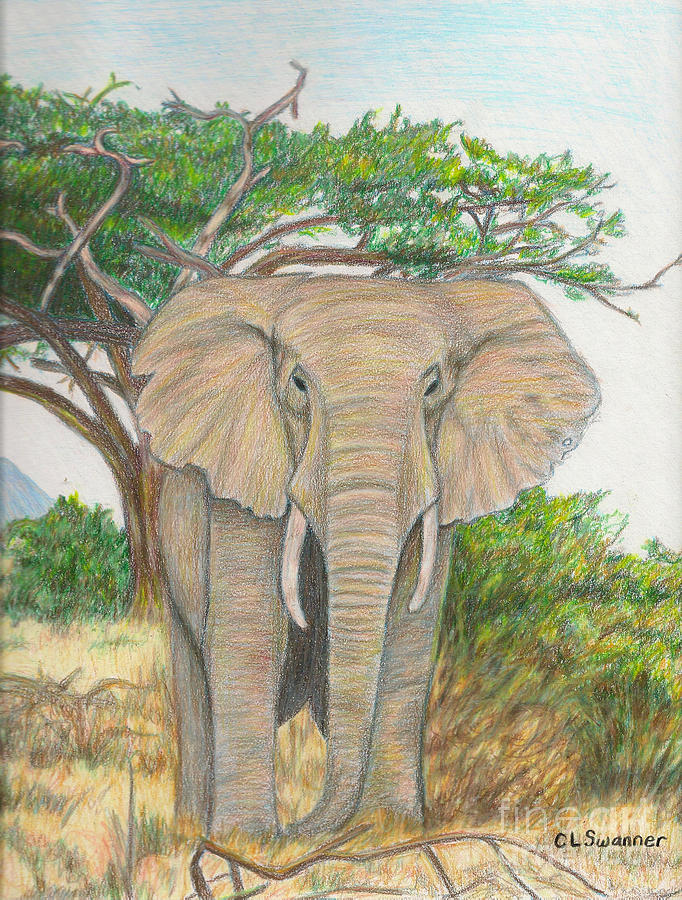 Elephant Drawing - Amboseli Elephant by C L Swanner