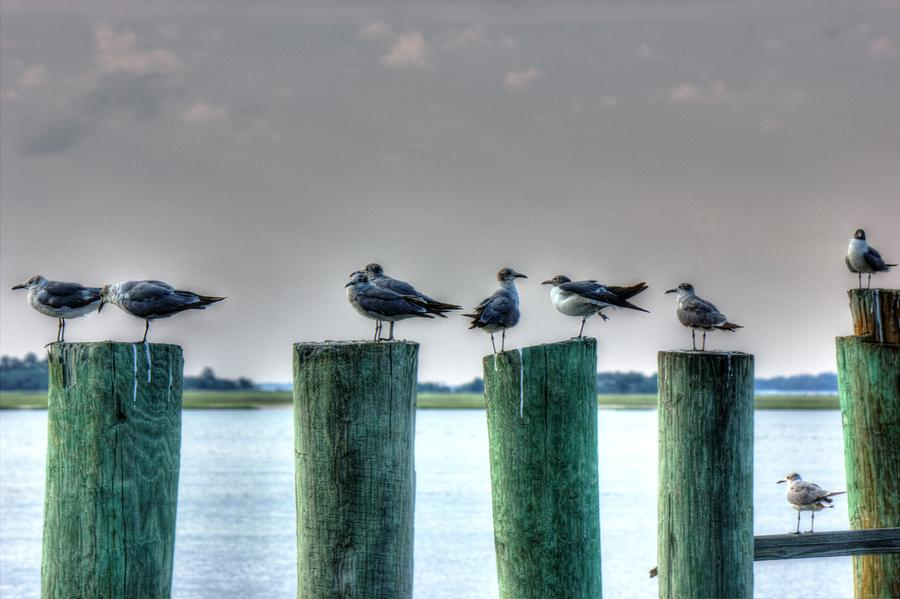 Gulls Photograph - Amelia Island Locals by Barry Jones
