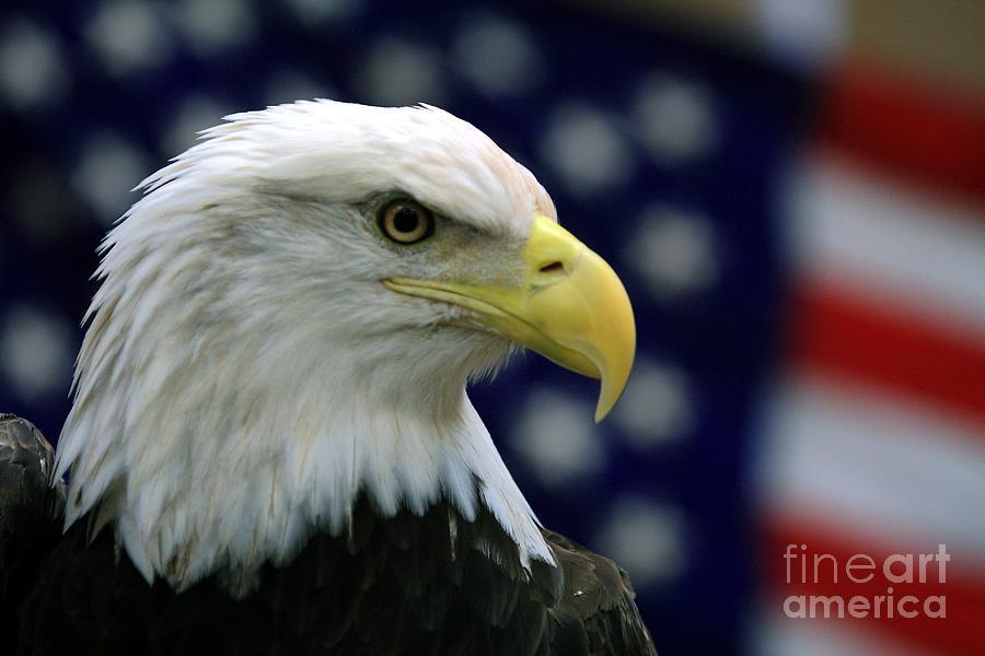 Wildlife_american Pride 2 Photograph