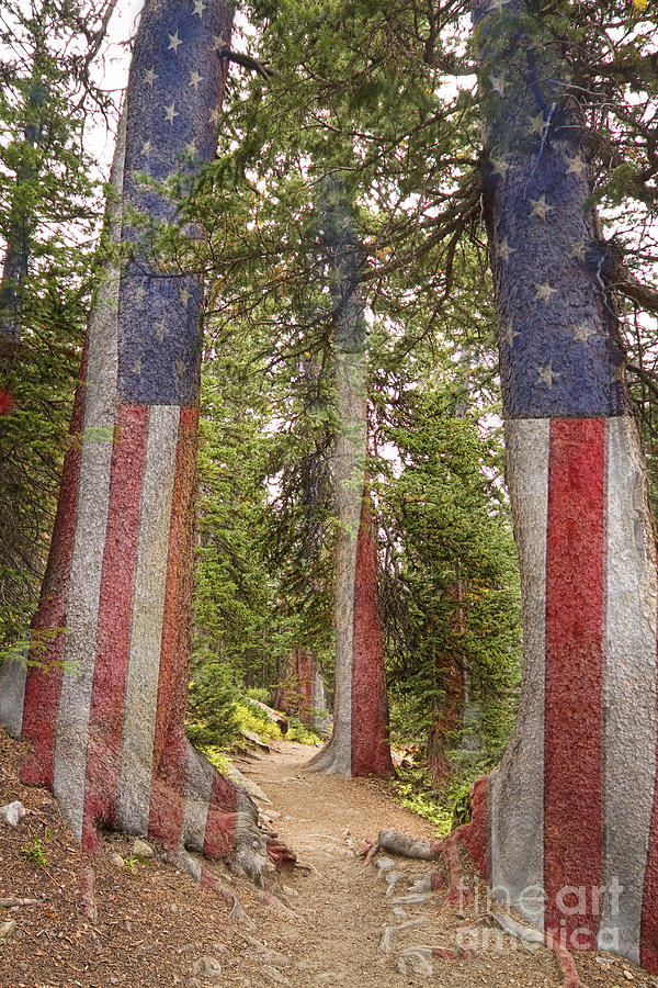 American The Beautiful Rocky Mountain Forest Photograph