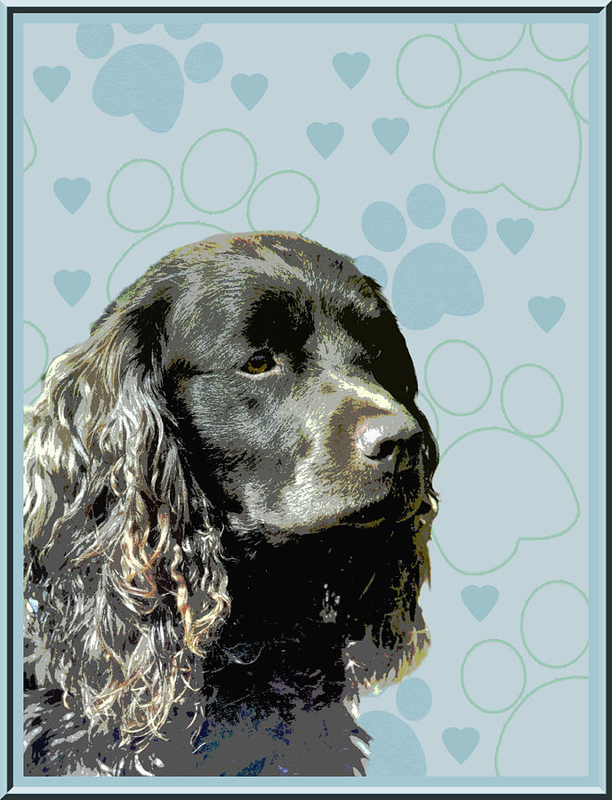American Water Spaniel Photograph - American Water Spaniel by One Rude Dawg Orcutt
