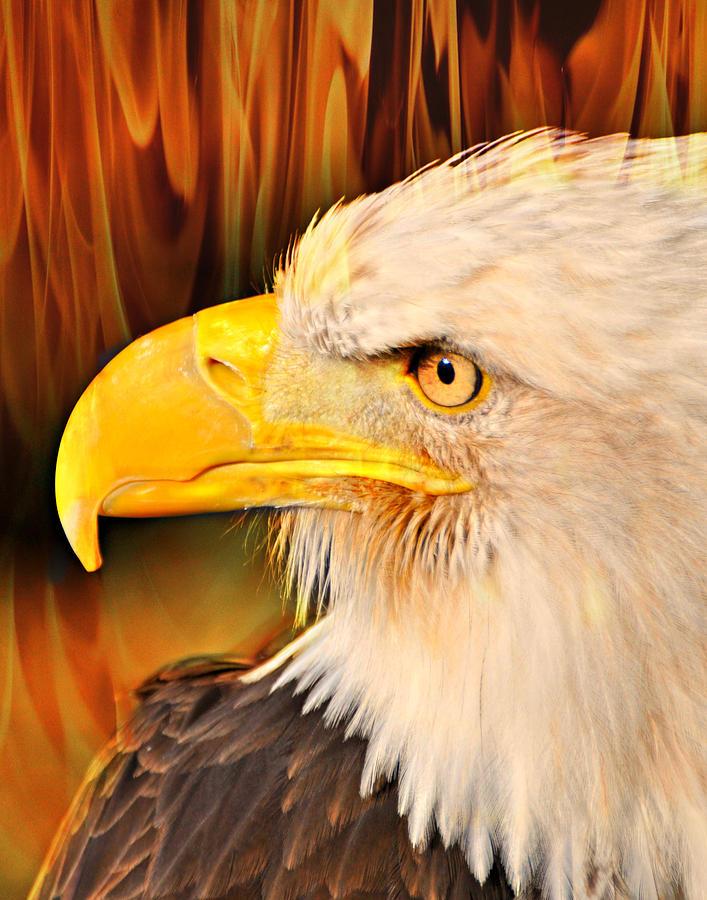Eagle Photograph - Americasn Bald Eagle by Marty Koch