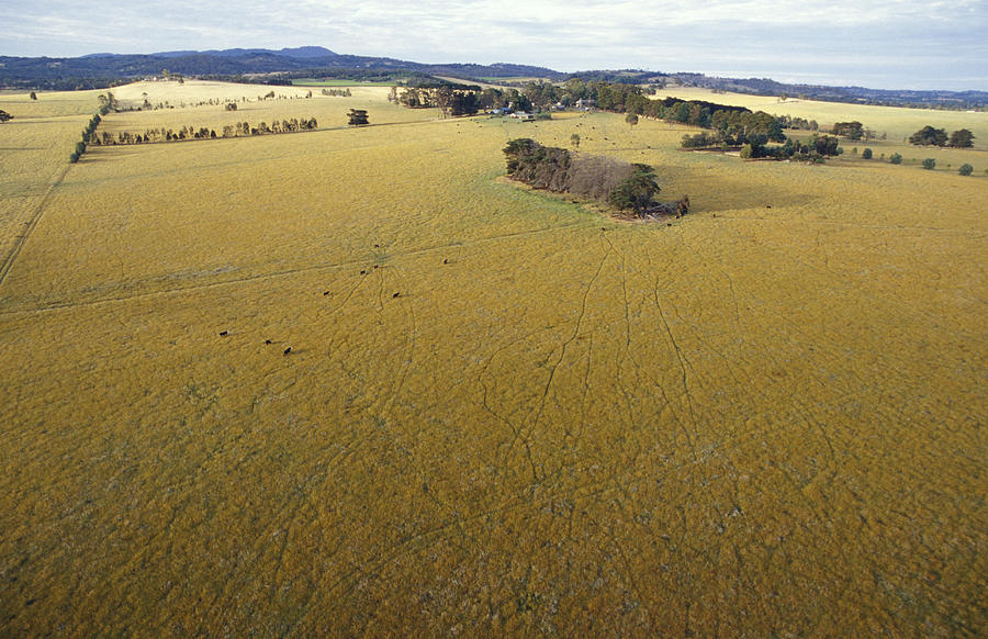 Yarra Valley Photograph - An Aerial View Of Farmland by Jason Edwards