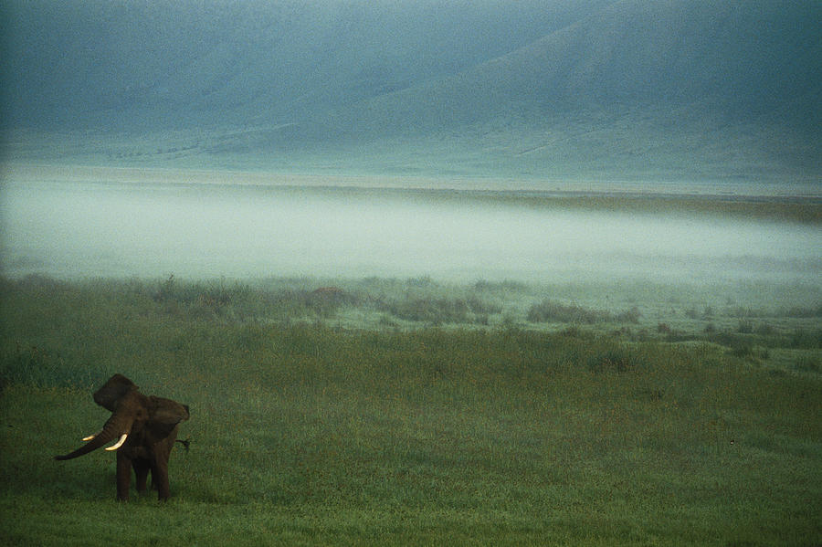 Outdoors Photograph - An African Elephant In The Ngorongoro by Chris Johns