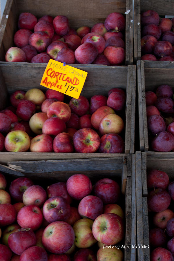 Cortland Apples Photograph - An Apple A Day by April Bielefeldt