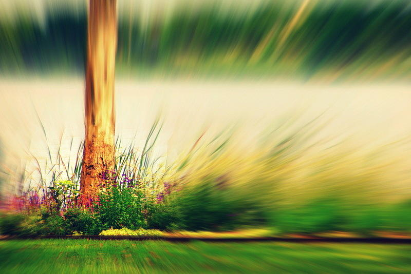 Nature Photograph - An Explosion Of Beauty by Shalini George