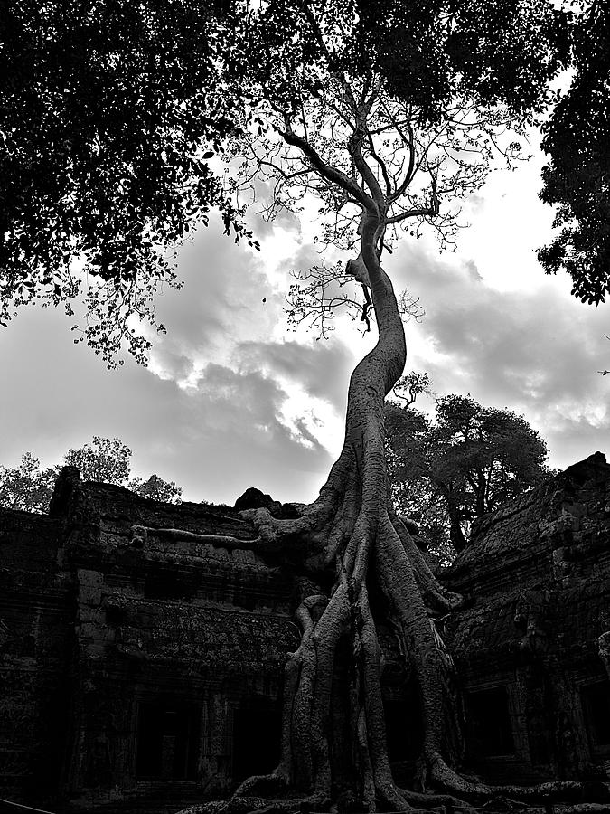 Ancient Photograph - Ancient Tree by Arj Munoz