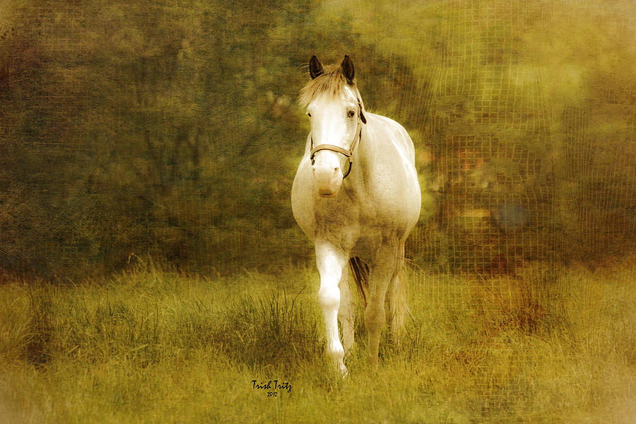 Horse Photograph - Andre On The Farm by Trish Tritz