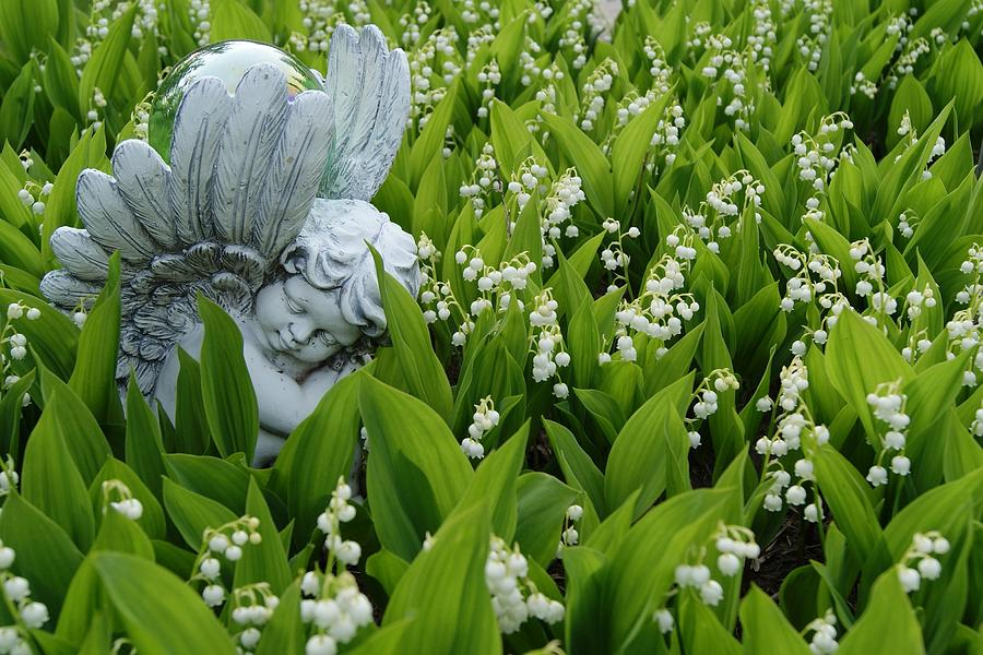 Angel Photograph - Angel In The Lilies by Steven Clipperton