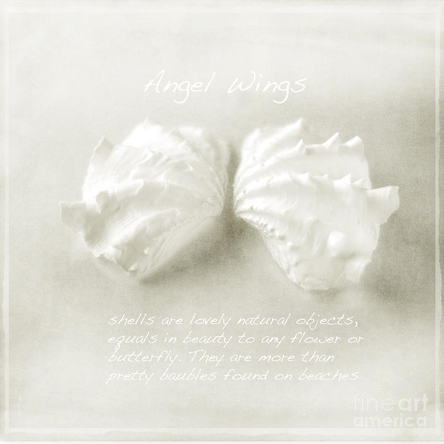 Angel Wing Shells Photograph - Angel Wings by Linde Townsend
