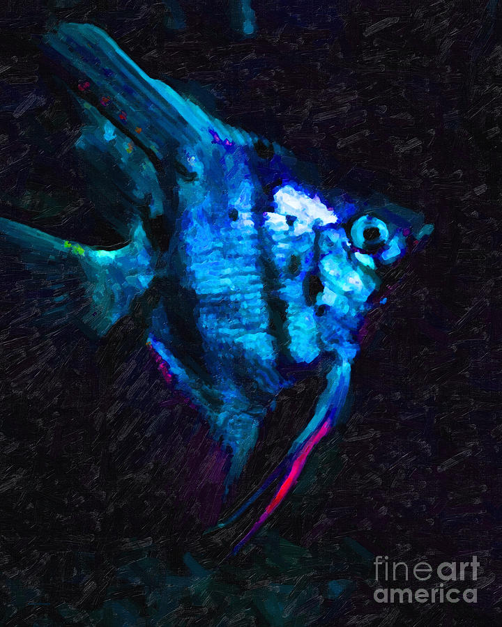 Fish Photograph - Angelfish by Wingsdomain Art and Photography