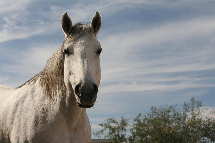 Horse Photograph - Angelina by Wendi Curtis