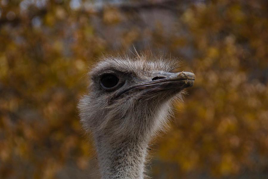 Bird Photograph - Annoyed Bird by Trish Tritz