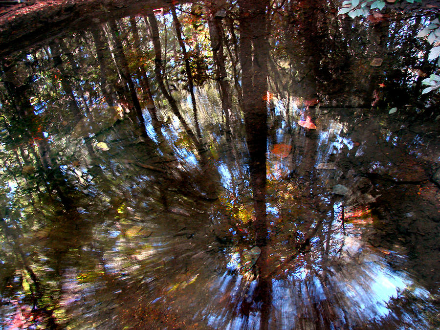 Pond Photograph - Anomaly  by Tammy Cantrell