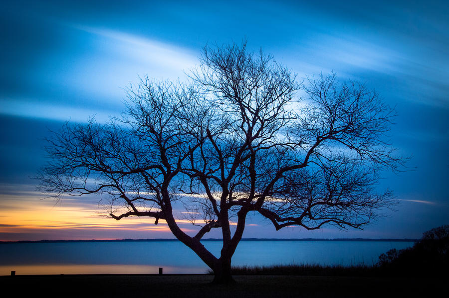 Currituck Photograph - Another Favorite Tree by Joye Ardyn Durham