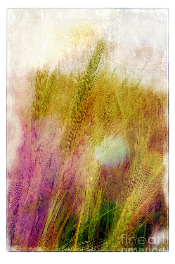 Field Photograph - Another Field Of Dreams by Judi Bagwell