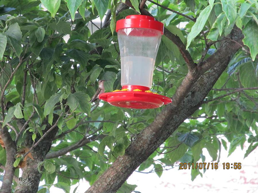 Hummingbird Photograph - Another Hummingbird by Tina M Wenger