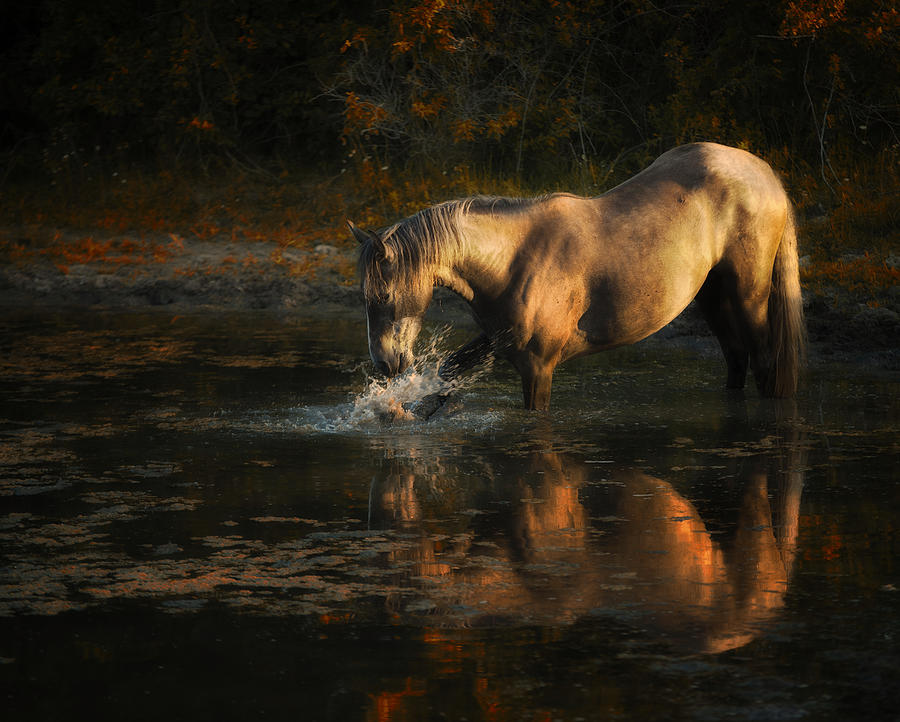 Equine Photograph - Another Morning At The Pond by Ron  McGinnis