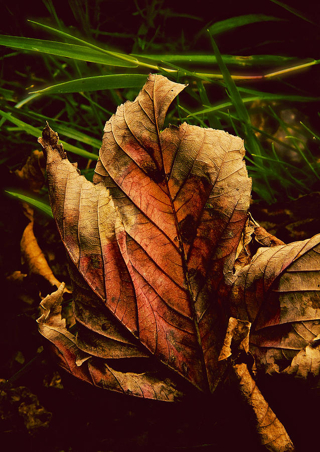 Leaf Photograph - Another Page Turned by Odd Jeppesen