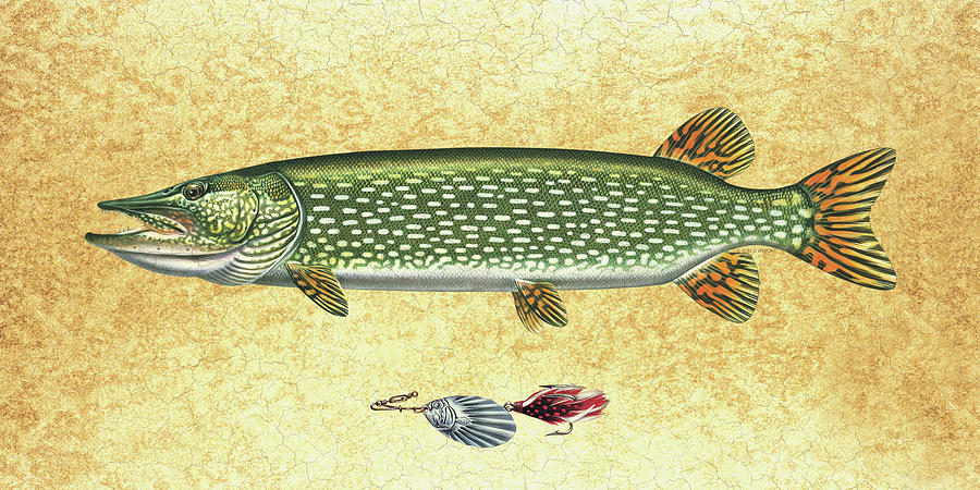 Jon Q Wright Painting - Antique Lure And Pike by JQ Licensing