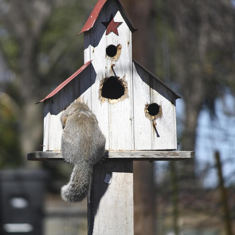 Squirrel Photograph - Anyone Home by Teresa Mucha
