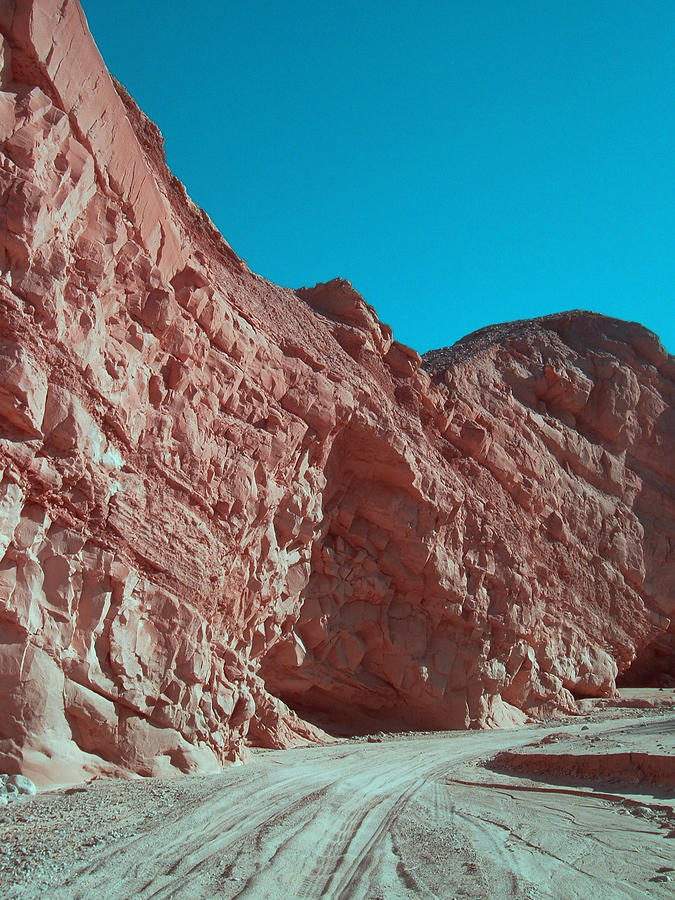 Nature Photograph - Anza Borrego Trail by Naxart Studio