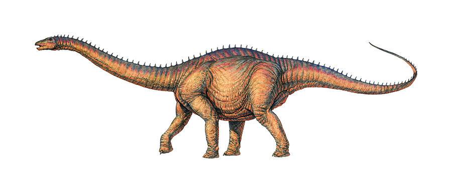 Brontosaurus Photograph - Apatosaurus Dinosaur by Joe Tucciarone