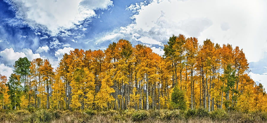 Apen Trees In Fall Photograph