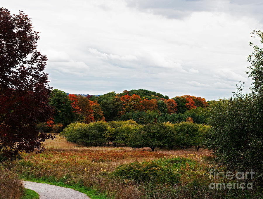 Dundas Valley Photograph - Apple Orchard Gone Wild by Barbara McMahon