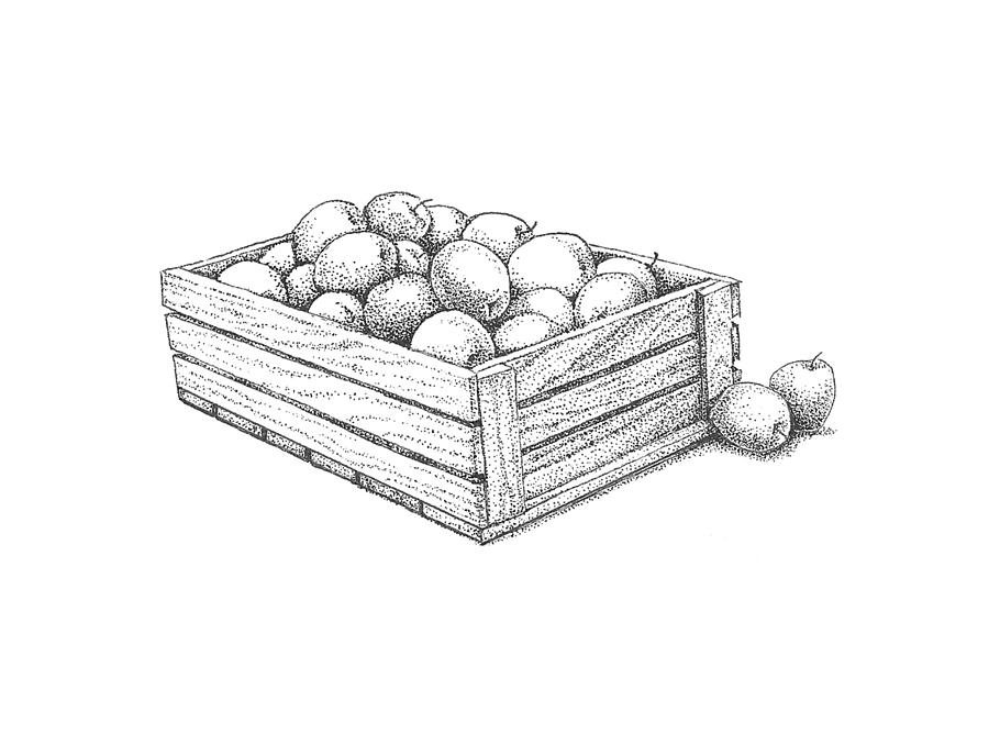 Apple Drawing - Applecrate by Christy Beckwith