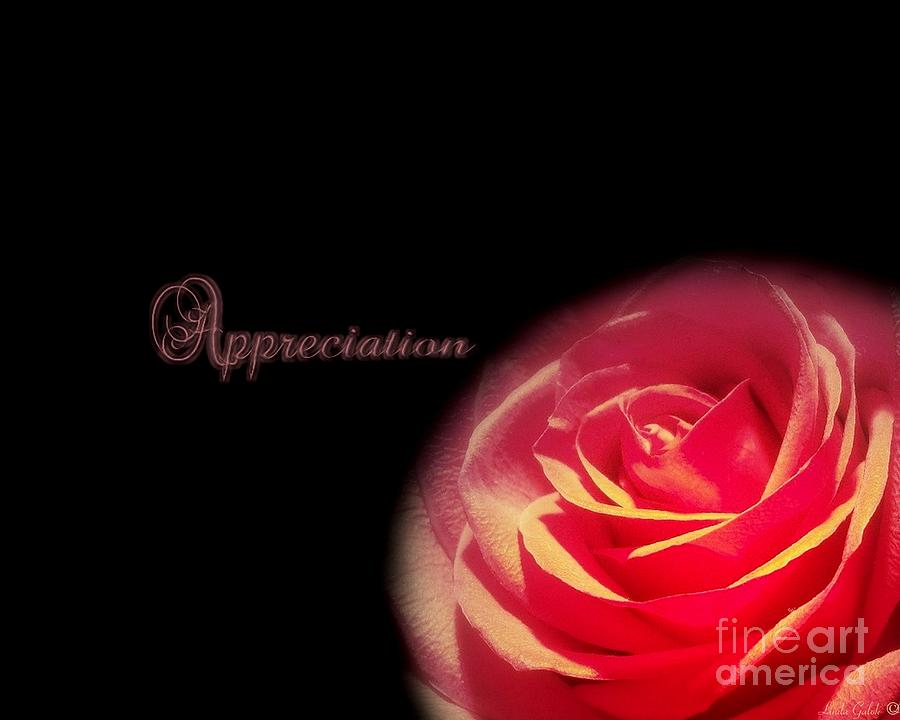 Appreciate Photograph - Appreciation by Linda Galok