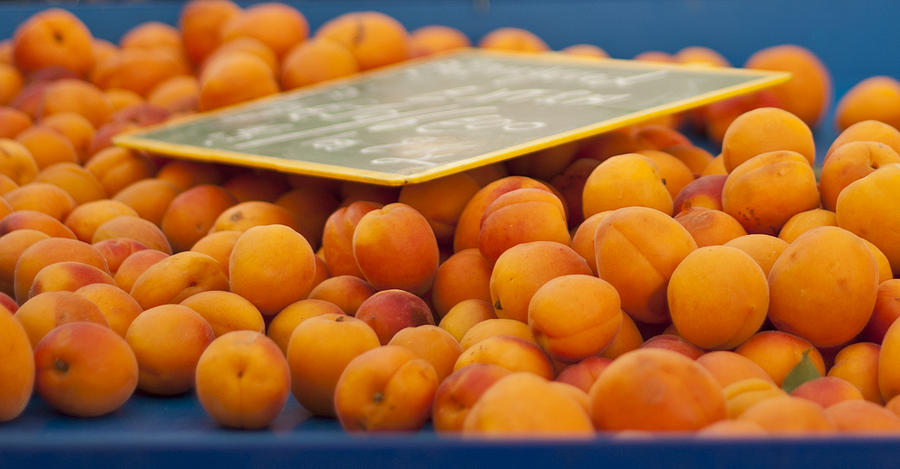 Apricot Photograph - Apricots by Georgia Fowler