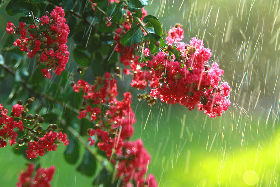 Red Flowers Photograph - April Showers by Jose Rodriguez