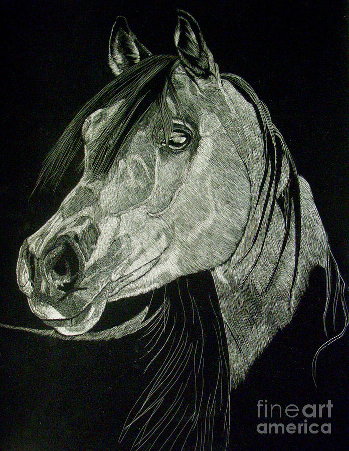 Horse Drawing - April The Horse by Yenni Harrison