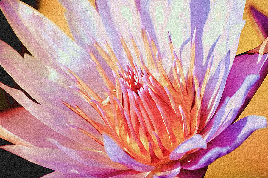 Water Lily Photograph - Aquatic Bloom by Julie Palencia